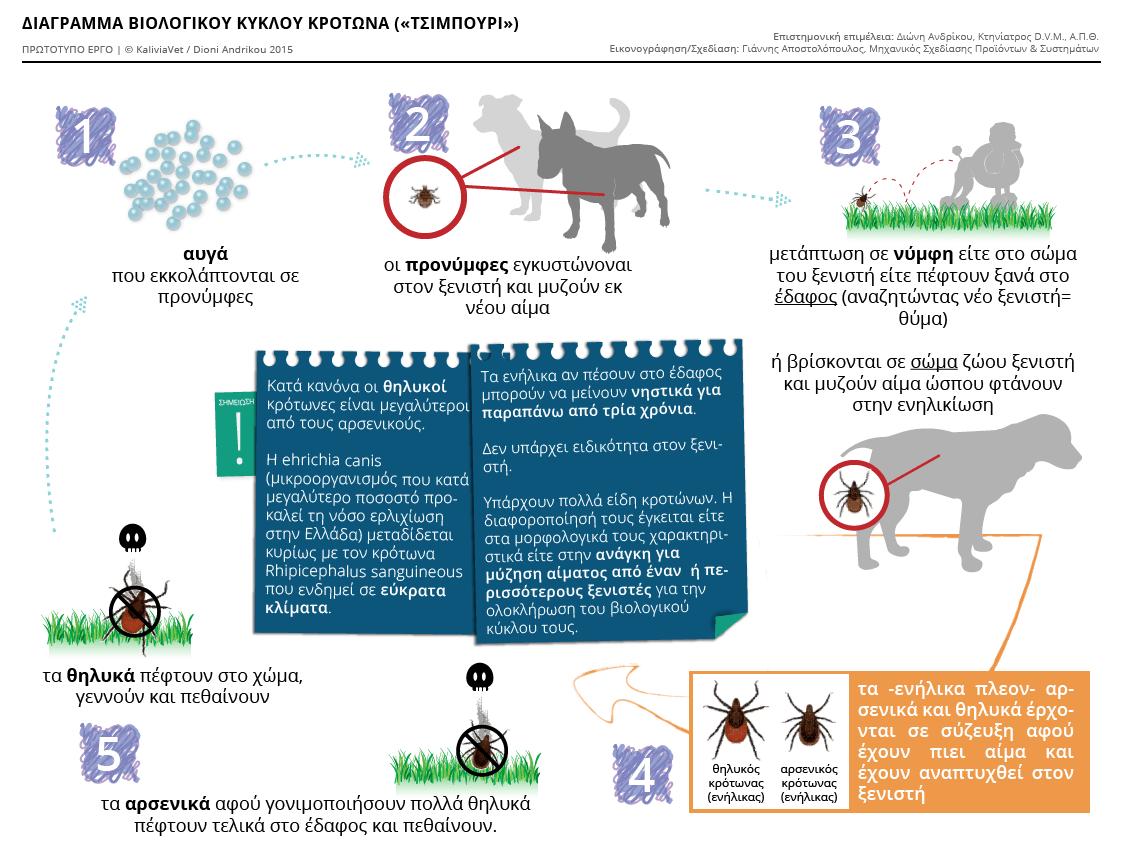 Διάγραμμα: Βιολογικός κύκλος του Κρότωνα (τσιμπούρι)